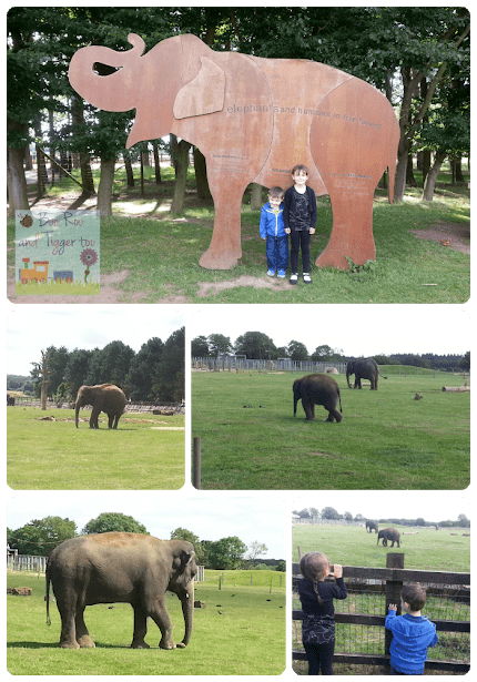 ZSL Whipsnade Zoo - Elephants