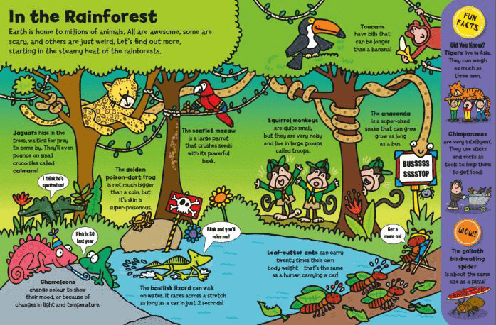 Animals Everywhere - In the Rainforest