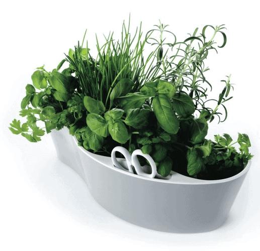 Occa-Home - Royal VKB Herb Garden & Scissors