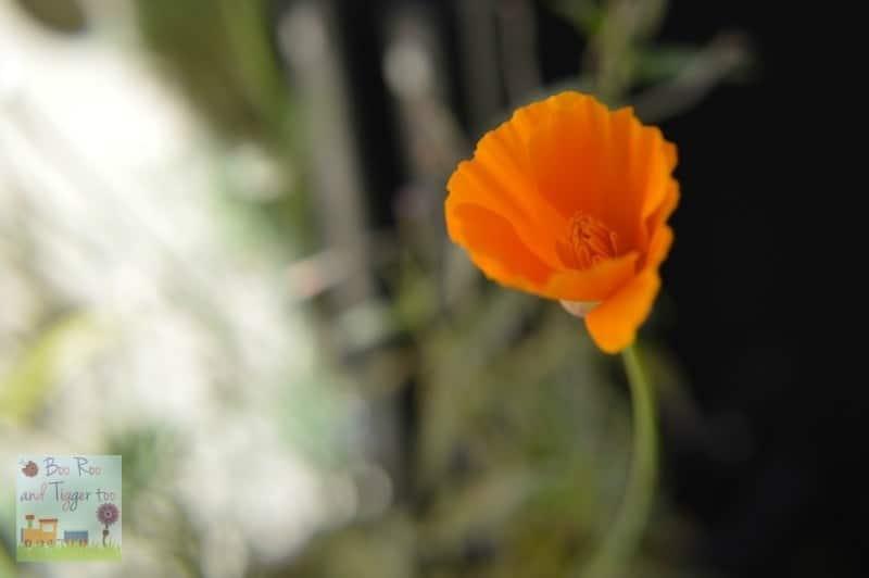 HDYGG - Orange Yarden