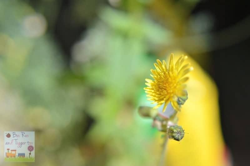 HDYGG - Yellow Yarden