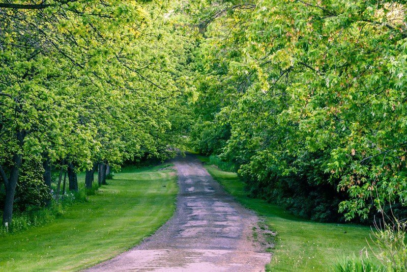 http://www.dreamstime.com/stock-photos-walking-path-woods-springtime-image42727353