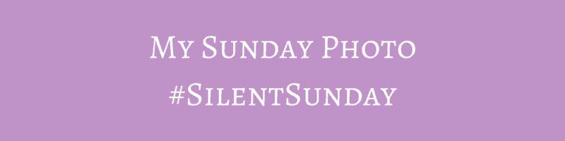 Polka Dot Family | My Sunday Photo #SilentSunday