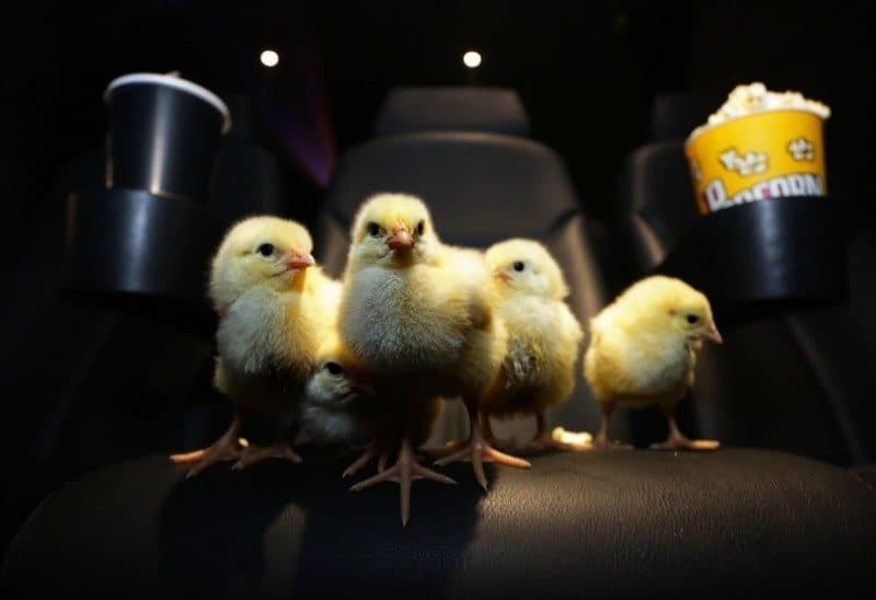 Chick Flick 1