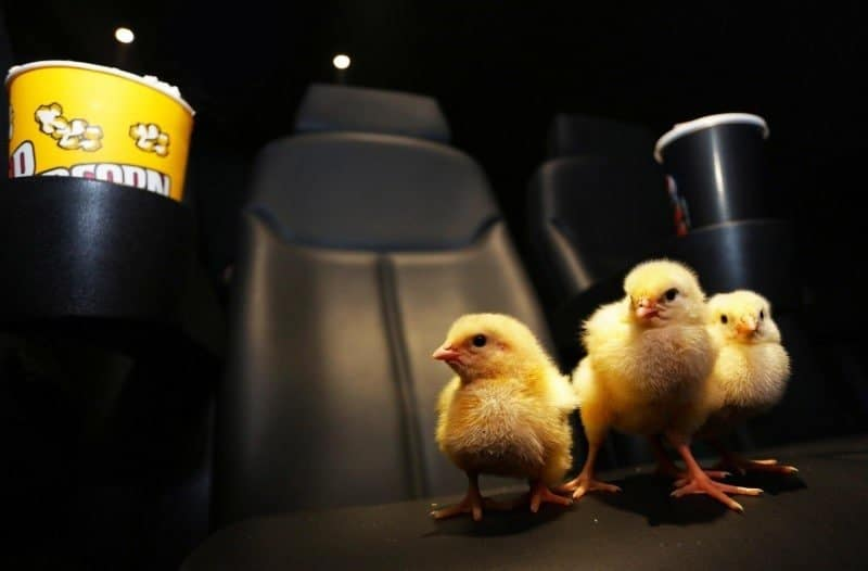 Chick Flick 2
