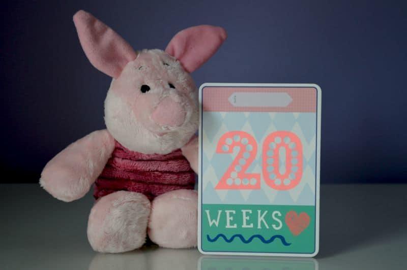 Piglet Pregnancy - Week 20