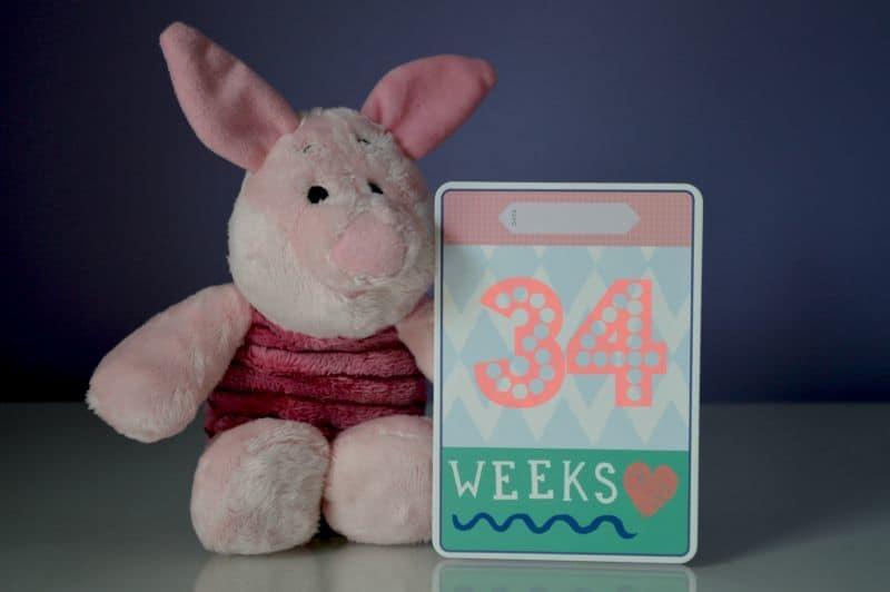 Piglet Pregnancy - Week 34