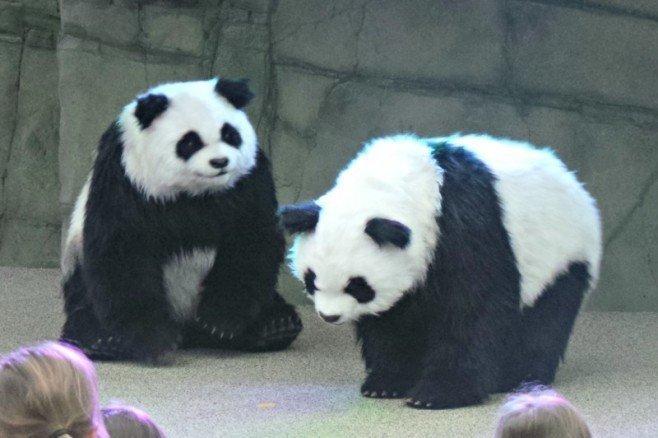 Chessington Pandamonium