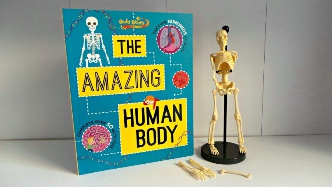 Gold Stars The Amazing Human Body