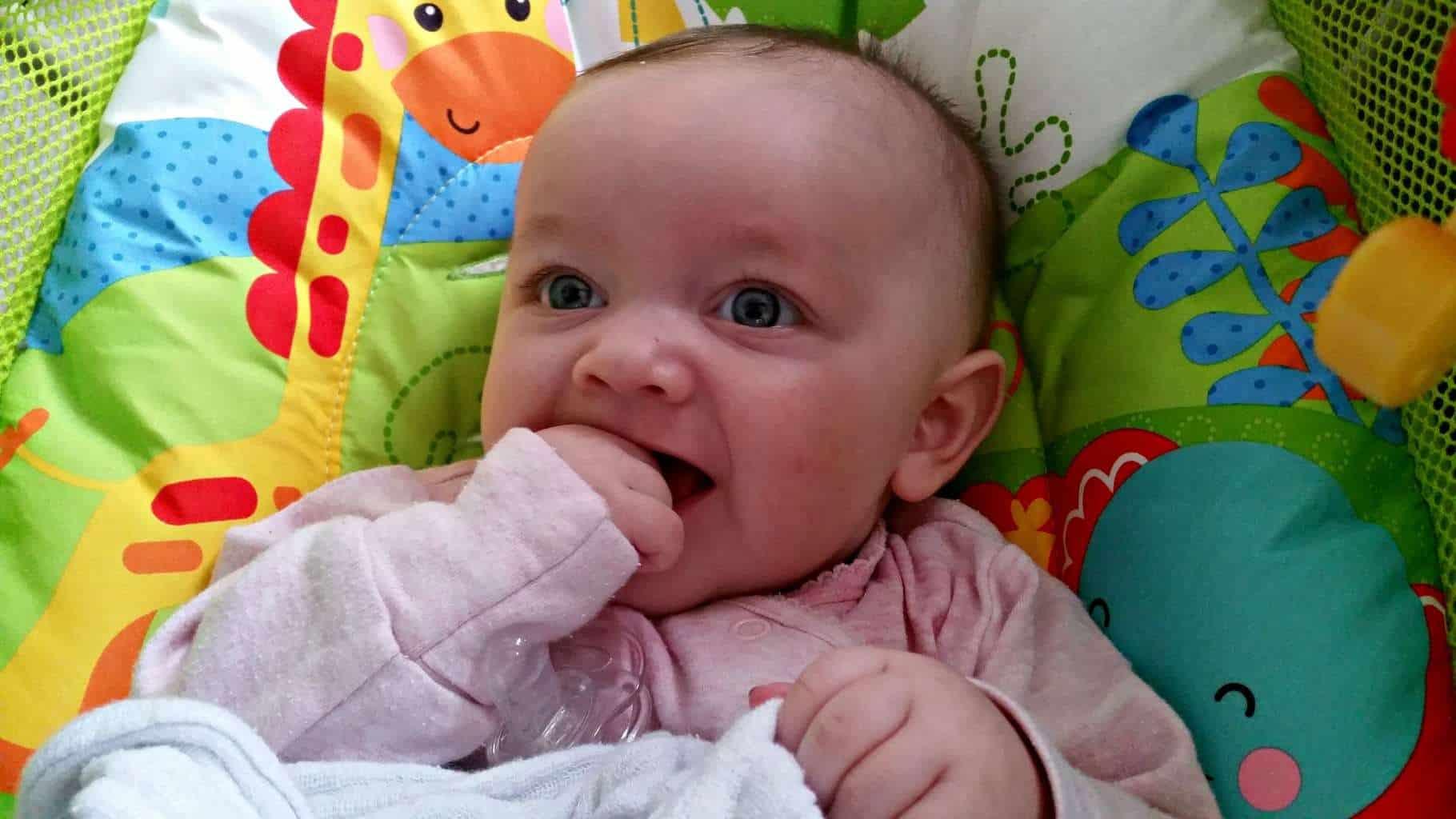 Piglet – Four Months Old