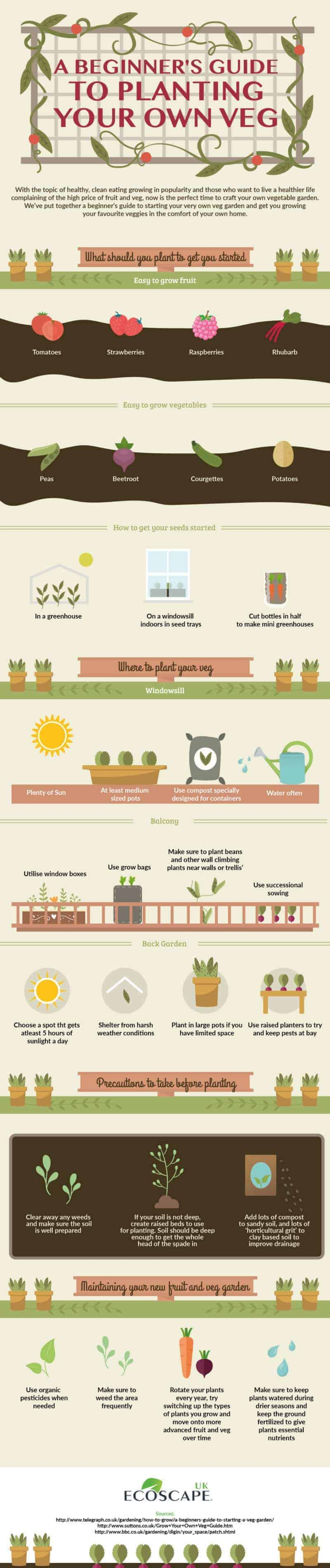 A beginers guide to planting your own veg - infographic