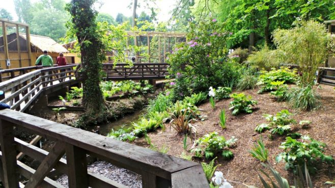 Tamarin Trail at Drayton Manor - Woodland