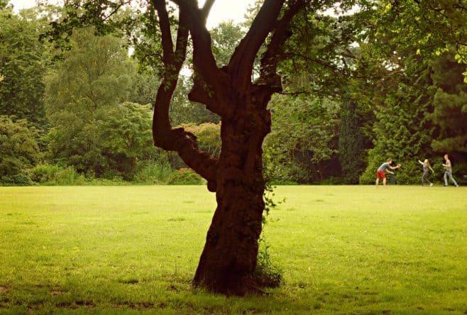 park-1505643_1280