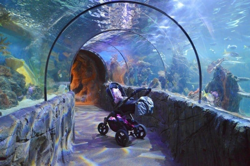 iCandy Peach All Terrain - SEALIFE Centres