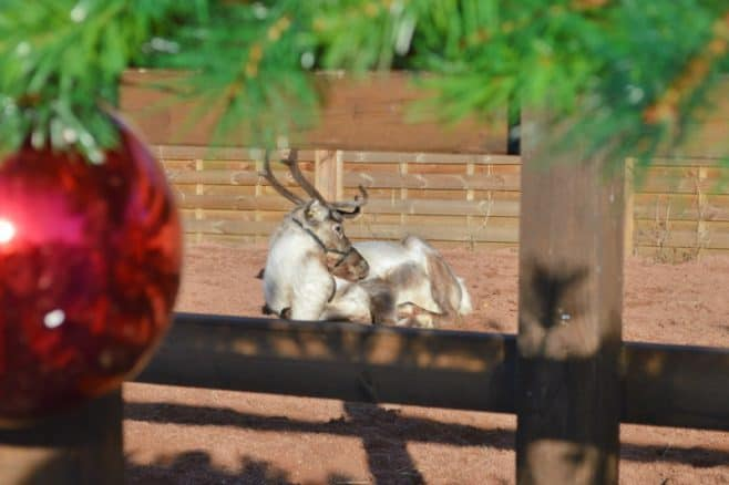 drayton-manor-magical-christmas-reindeer