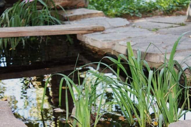 garden-pond-1045473_1280