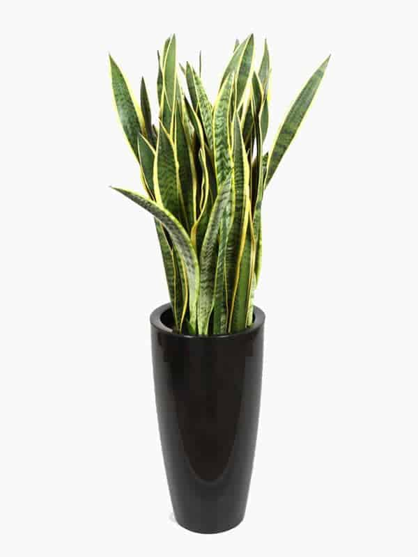 12 Great House Plants for Your Bedroom   Boo Roo and ...