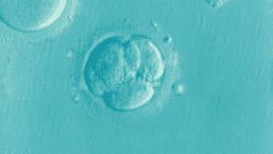 Motherhood After 30: Egg Donation - Secondary Infertility Solution?