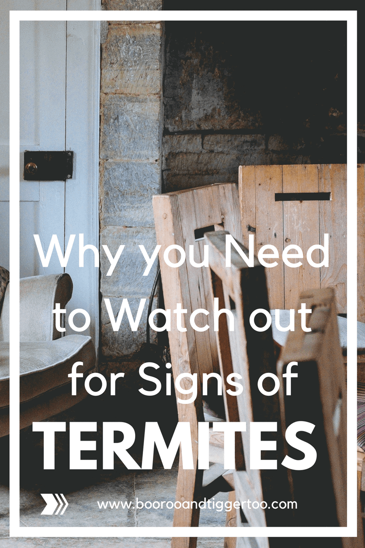 Why you Need to Watch out for Signs of Termites