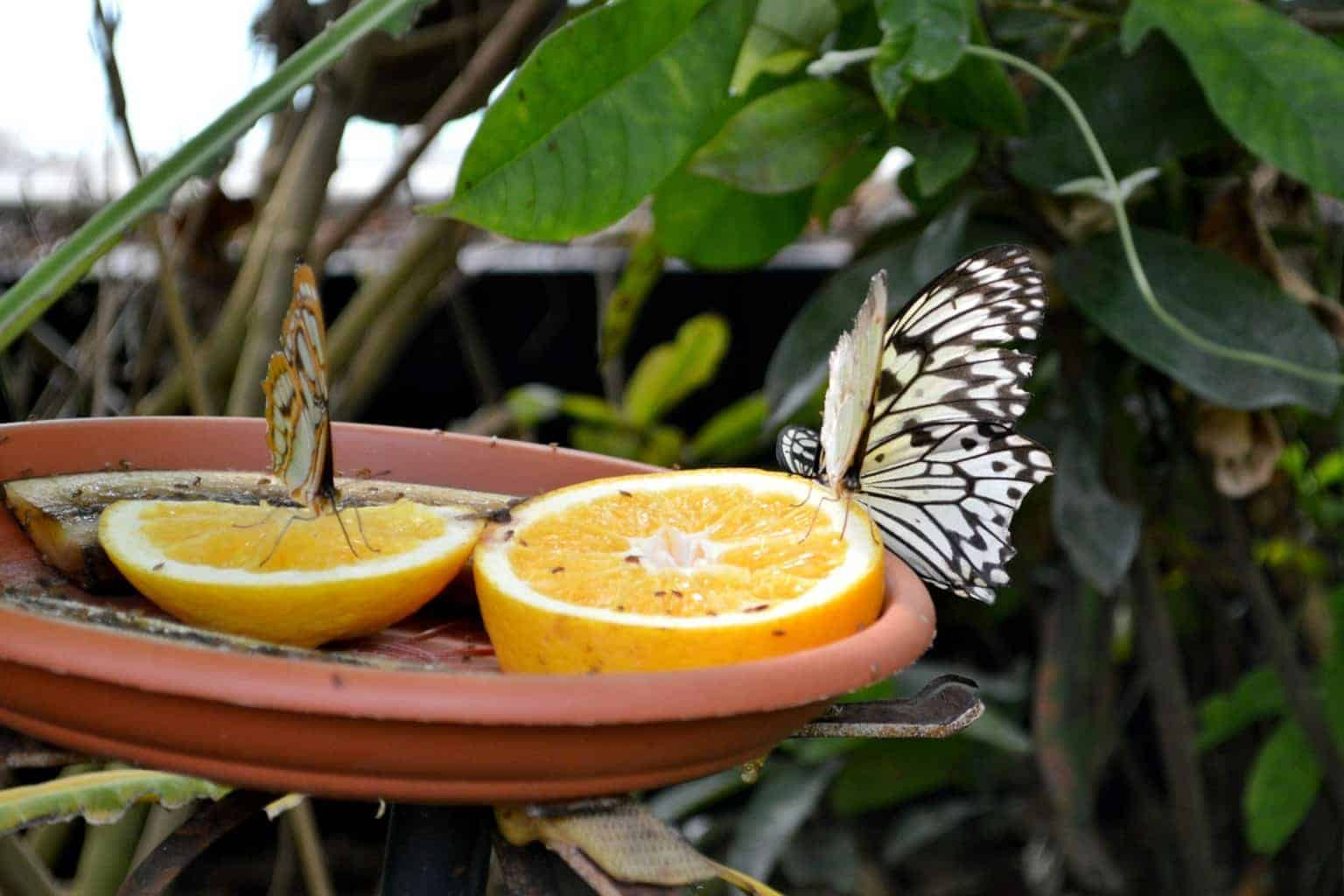 A Postcard From… Butterfly House, Whipsnade Zoo