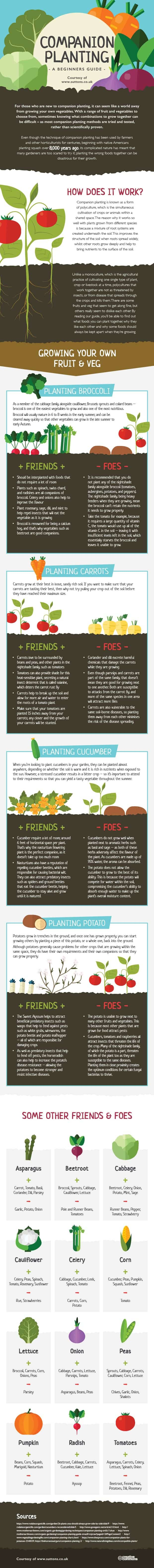 A Beginners Guide to Companion Planting