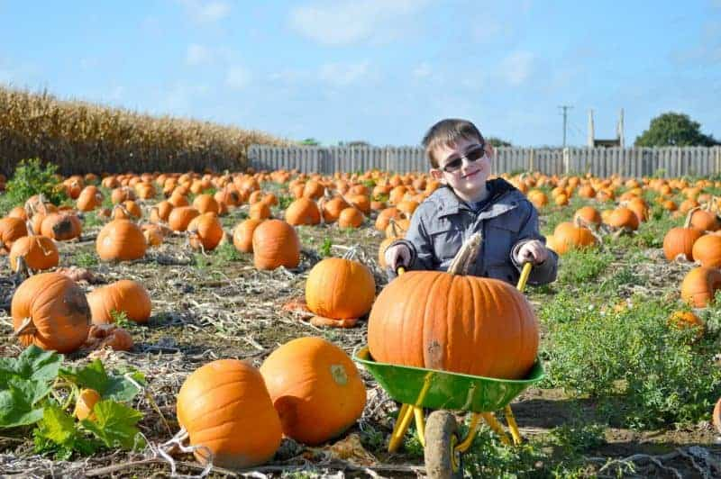 Hirsty's Family Fun Park Pumpkin Patch