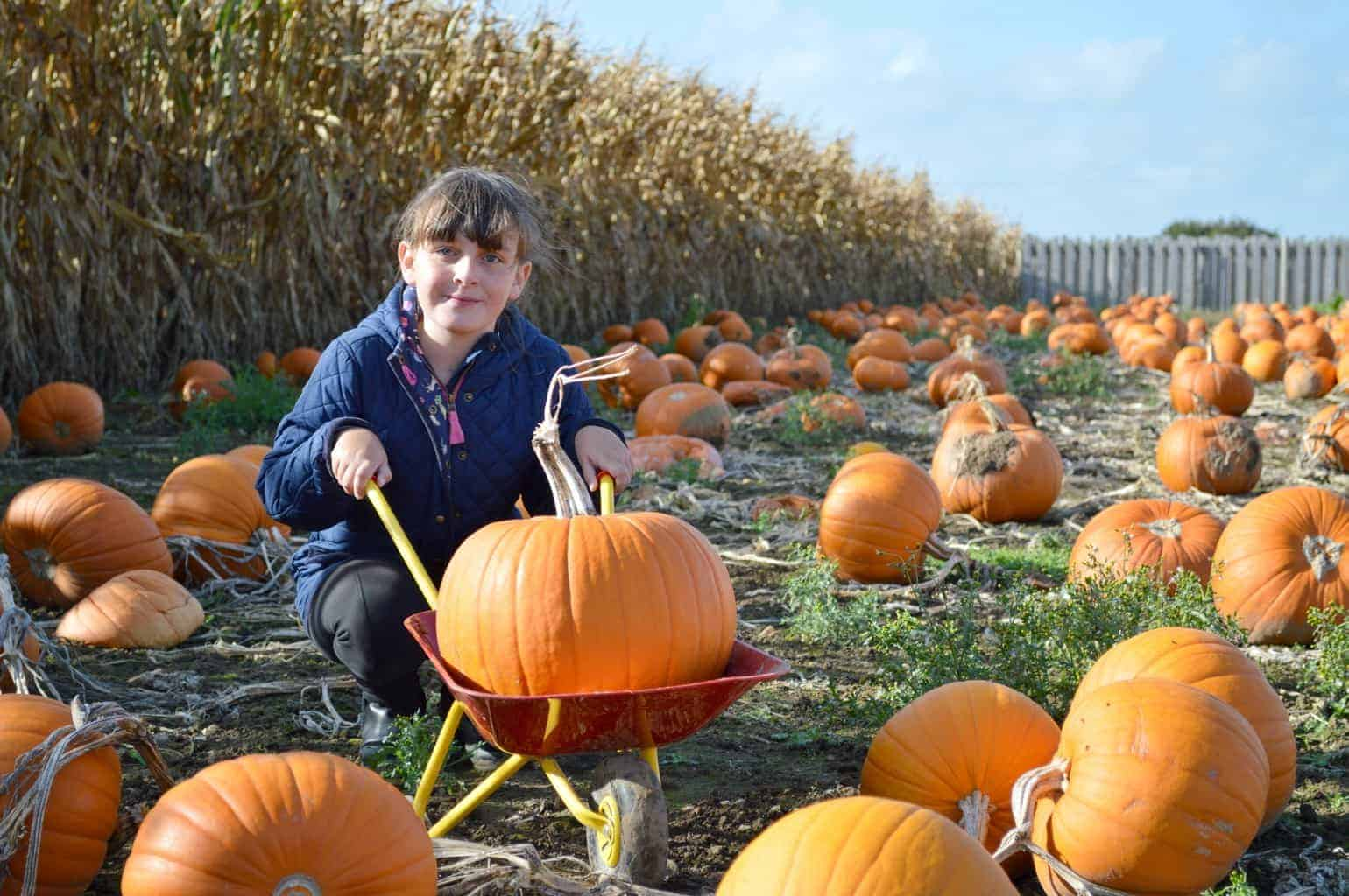 A Postcard From… Hirsty's Family Fun Park Pumpkin Patch