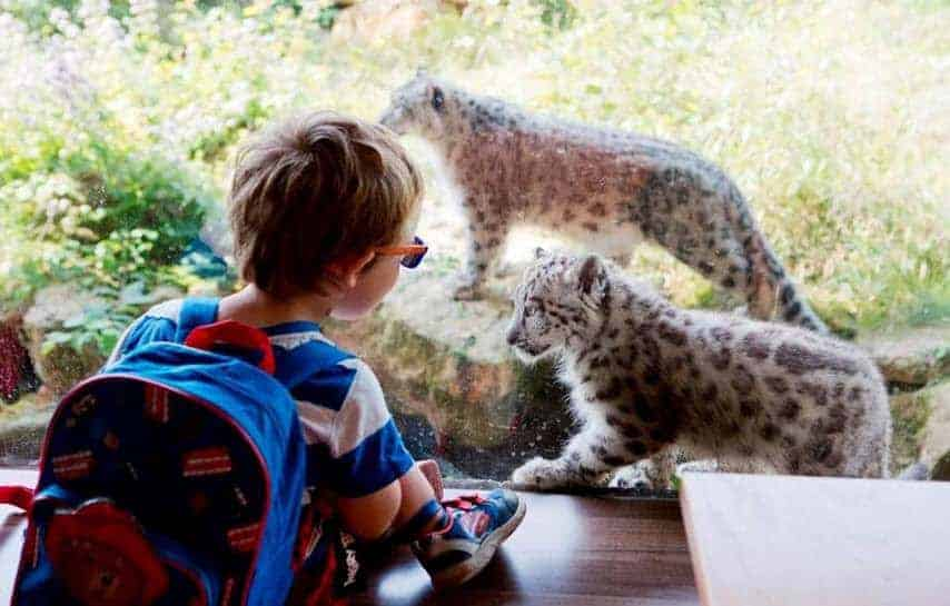 Join in the monkey business this half term at Twycross Zoo