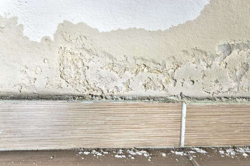 The Main Causes of Damp (and How to Fix Them)