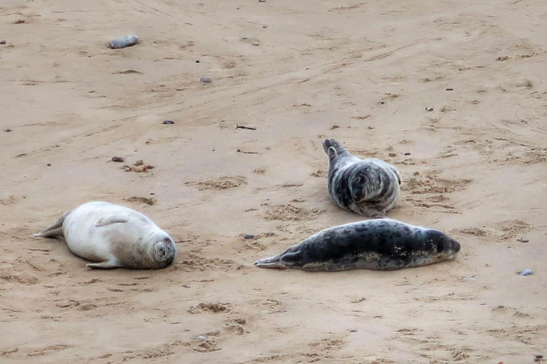 Horsey Gap | Horsey Seals