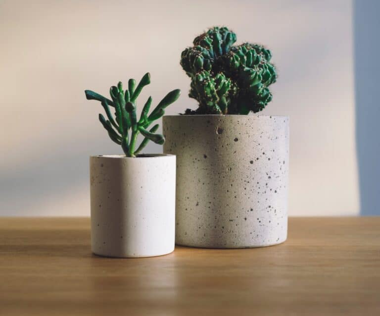 two houseplants in pots sitting on a table