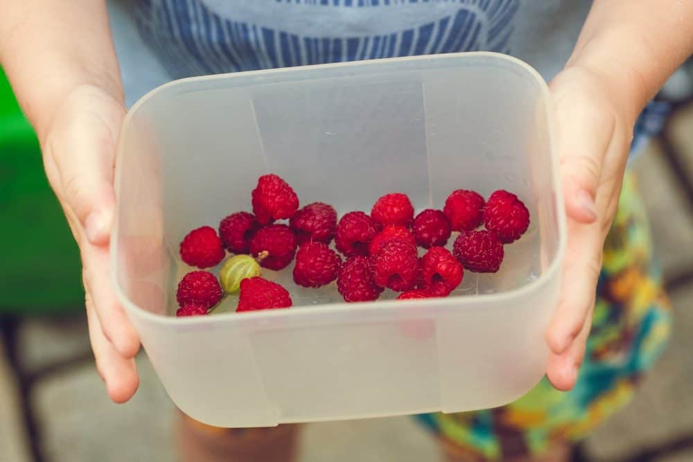 child with a clear plastic tub filled with raspberries