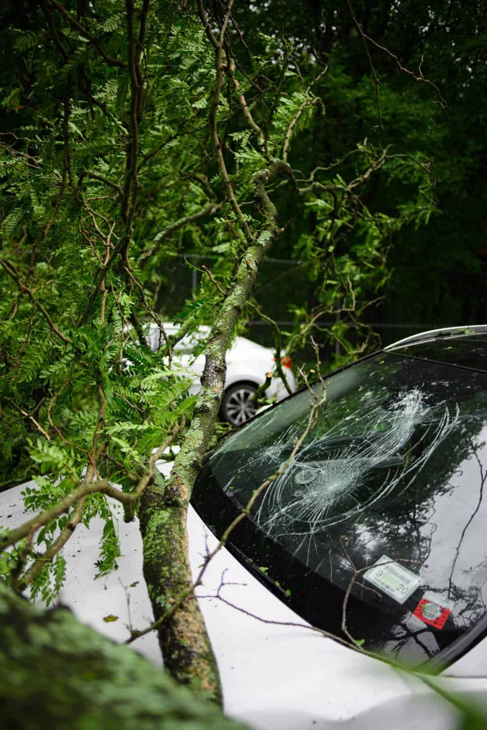 The windshield of a white car broken from a falling tree due to a storm