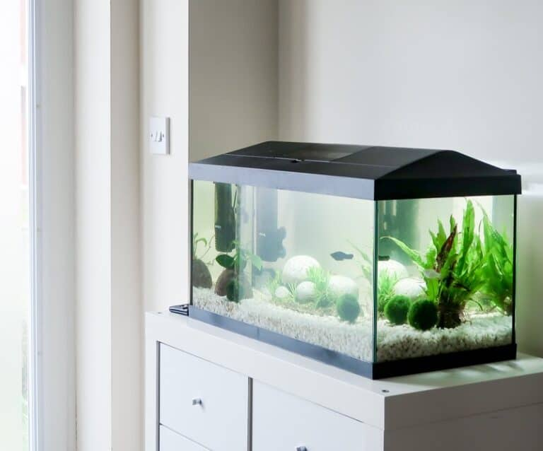 API Fishcare - Tropical Home Aquarium