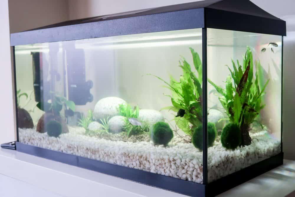 API Fishcare - Tropical home Aquarium
