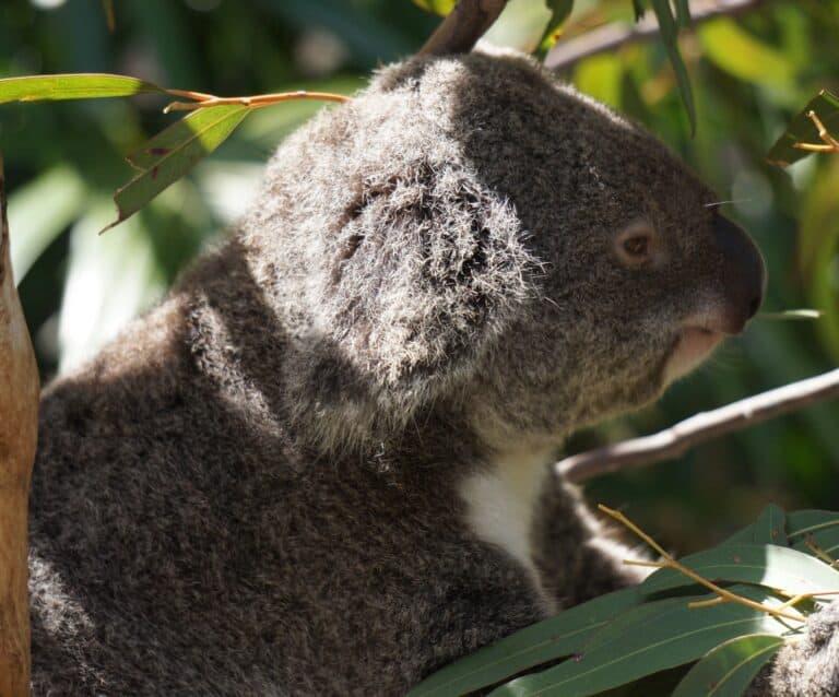 Nature Parks near Brisbane - Hamilton Island
