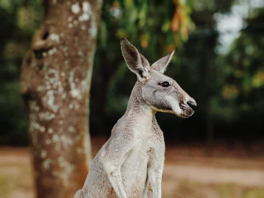 top nature parks near Brisbane - Australia Zoo