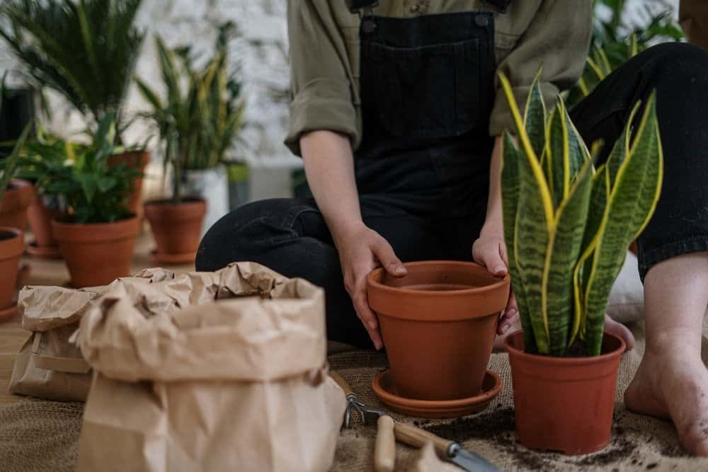 How to Make the Most Out of Your Garden