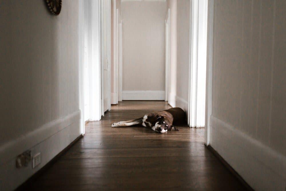 Top Benefits Of Replacing Flooring With Hardwood