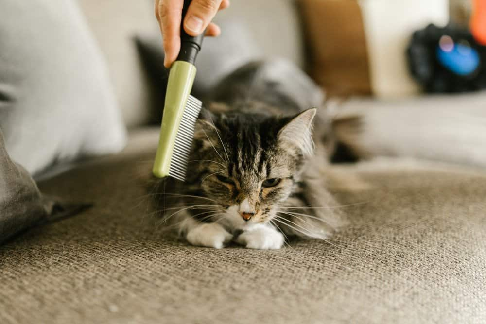 Keeping the home clean when you have pets