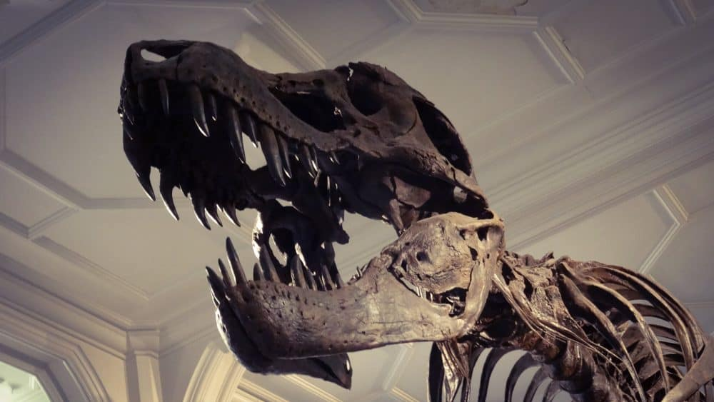 Manchester Museum - best museums in the North of England