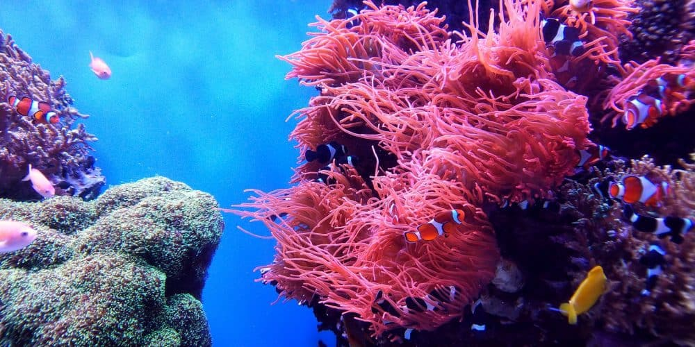 Deep Sea World - educational attractions in Scotland